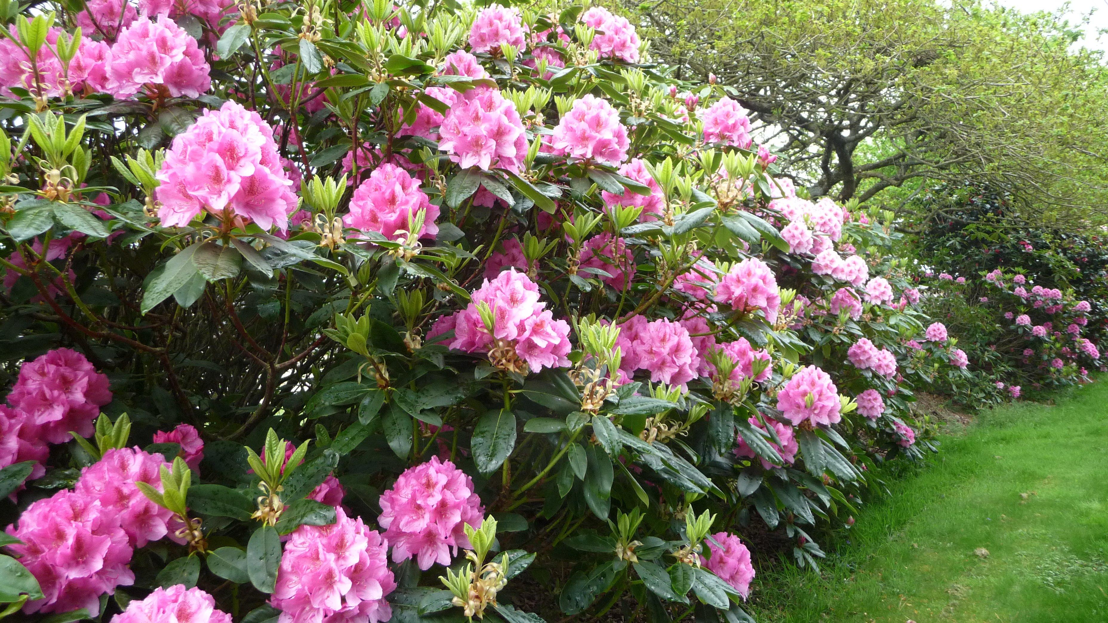 Mamyflo d co jardin for Jardin ornement fleurs